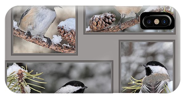 Chickadees In Winter IPhone Case