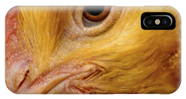 Chicken Vision IPhone Case