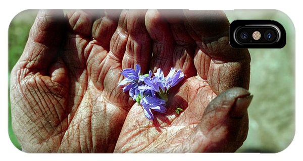 Chicory Flowers In Peasants' Hands IPhone Case