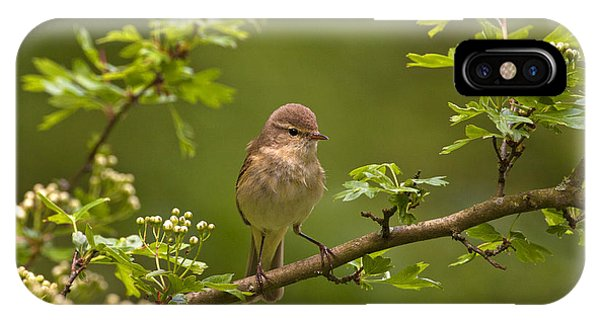 Chiffchaff IPhone Case