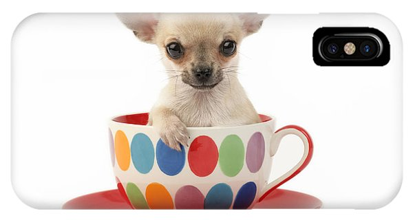 Sitting iPhone Case - Chihuahua In Cup Dp684 by Greg Cuddiford