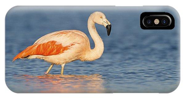 Chilean Flamingo IPhone Case