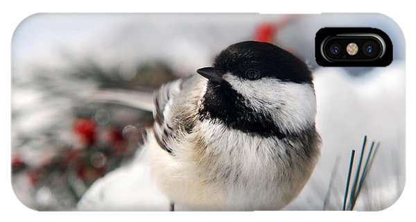 Chilly Chickadee IPhone Case