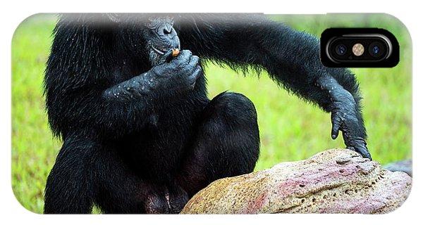 Chimpanzees IPhone Case