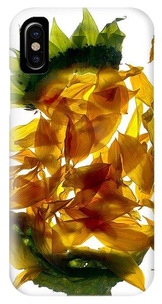 Sunflower iPhone Case - Chiquita Sunflower by Julia McLemore