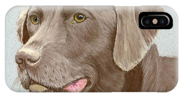Chocolate Labrador Retriever IPhone Case