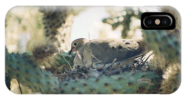 Cholla Dove IPhone Case