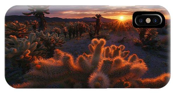 Us National Parks iPhone Case - Cholla Garden by Inigo Cia