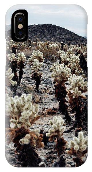 Cylindropuntia Bigelovii iPhone Case - Cholla Teddy Bear Cactus Garden  by Kyle Hanson