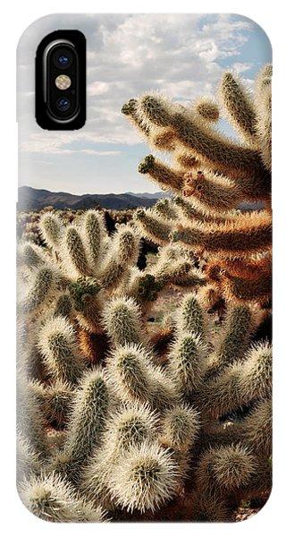Cylindropuntia Bigelovii iPhone Case - Cholla Teddy Bear Cactus Garden Magic Hour by Kyle Hanson