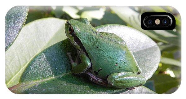 Chorus Frog On A Rhodo IPhone Case