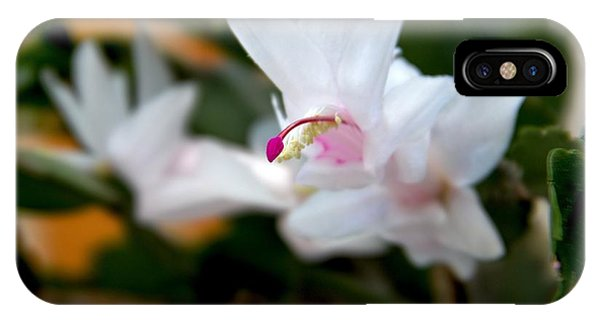 Christmas Cactus Flower Phone Case by Marv Russell