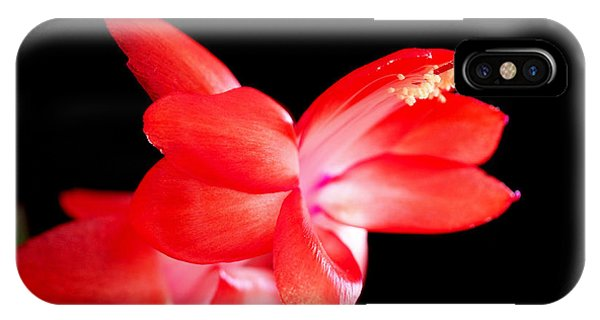 Christmas Cactus Flower IPhone Case