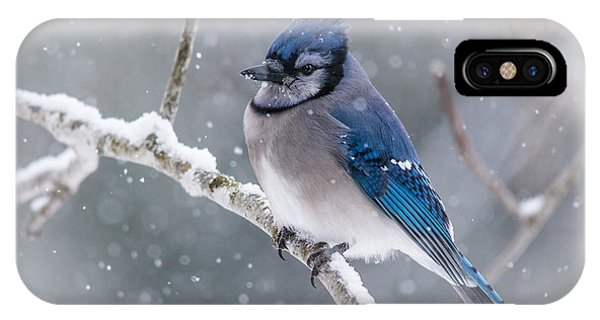 Christmas Card Bluejay IPhone Case