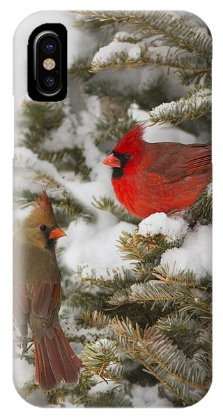 Christmas Card With Cardinals IPhone Case