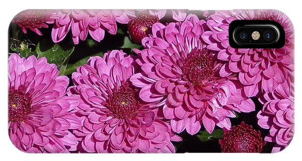 Chrysanthemum 2 IPhone Case