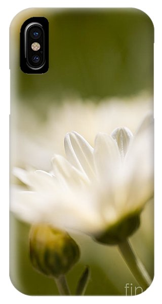 Chrysanthemum Flowers IPhone Case