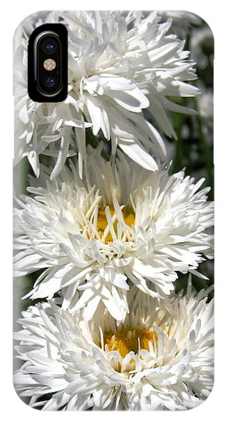 iPhone Case - Chrysanthemum Named Crazy Daisy by J McCombie