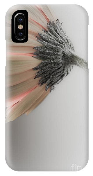 Chrysanthemum Petals 1 IPhone Case