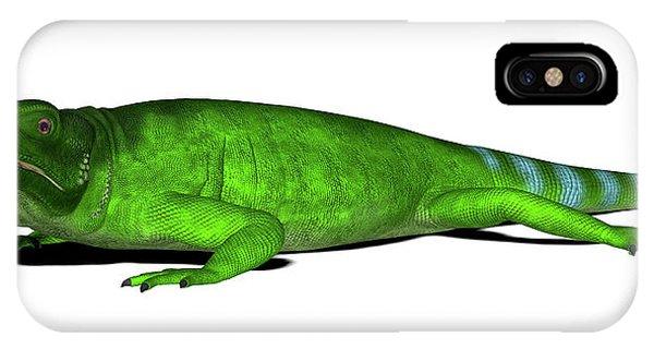 Chuckwalla Lizard Phone Case by Friedrich Saurer