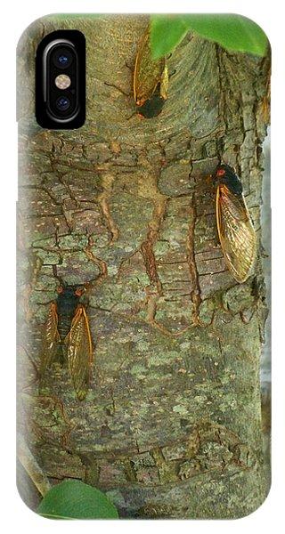 Cicada Season IPhone Case