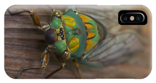 Green Whizzer Cicada Phone Case by Debbie Cundy