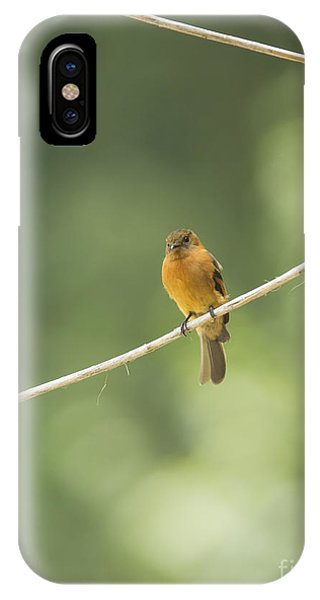 Cinnamon Flycatcher IPhone Case