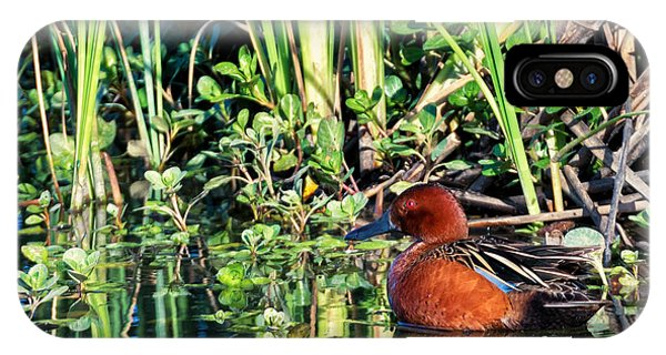 Cinnamon Teal And Dragonfly IPhone Case