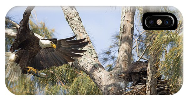 Bald Eagle Nest IPhone Case