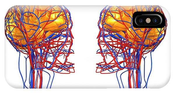Organ iPhone Case - Circulatory System And Brain by Roger Harris