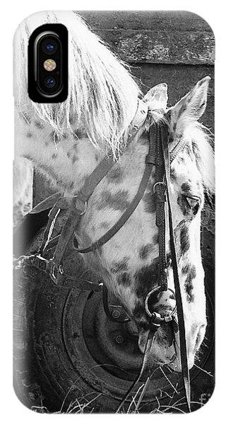 Circus Pony IPhone Case