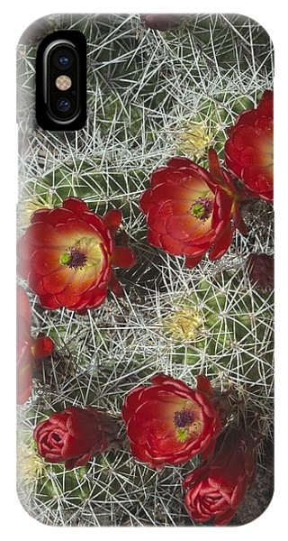 Claret Cactus - Vertical IPhone Case