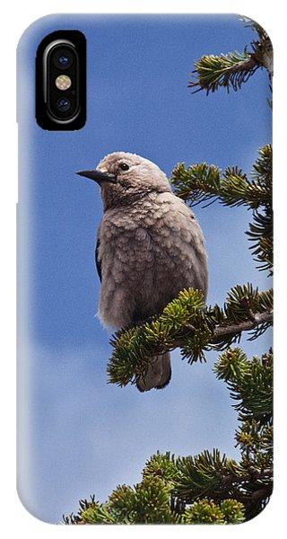 Clark's Nutcracker In A Fir Tree IPhone Case