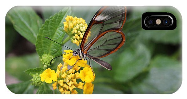 Clearwing Butterfly IPhone Case