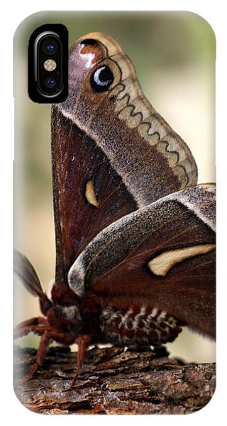 Clem The Moth IPhone Case