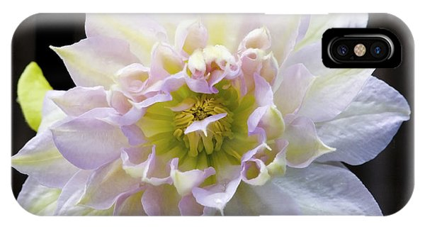 Clematis 'belle Of Woking' IPhone Case