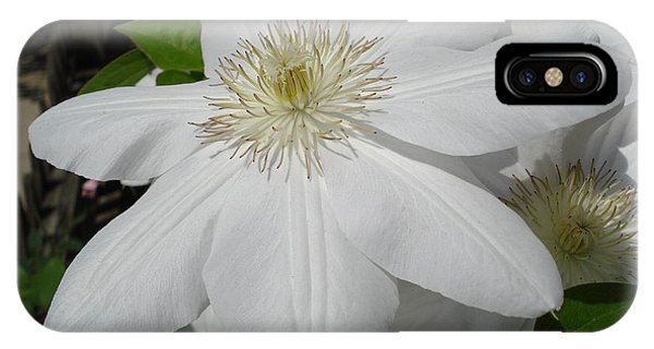 Clematis - Madame Le Coultre IPhone Case