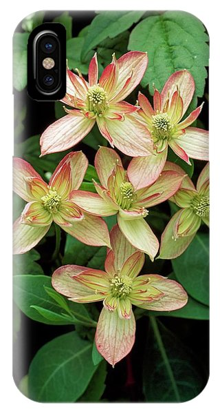 Clematis Montana 'marjorie' Phone Case by Geoff Kidd/science Photo Library