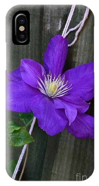 IPhone Case featuring the photograph Clematis On A String by Jeremy Hayden