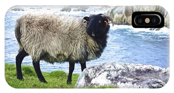 Clew Bay Sheep IPhone Case