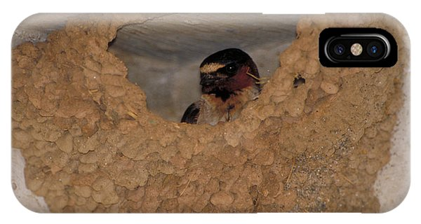 Cliff Swallows IPhone Case