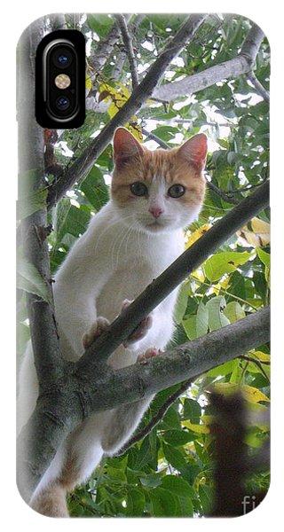 Climbing Kitty IPhone Case