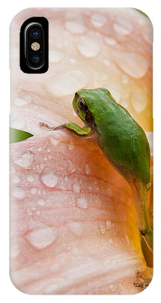 Climbing Up IPhone Case