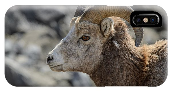 Close Big Horn Sheep  IPhone Case