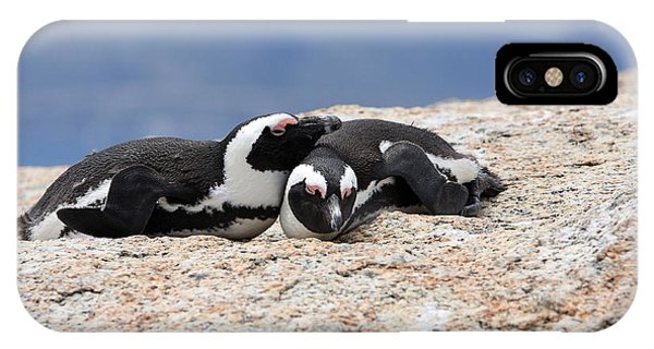 Close Bonds, African Penguin IPhone Case