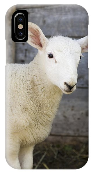 Sheep iPhone X / XS Case - Close Up Of A Baby Lamb by Michael Interisano
