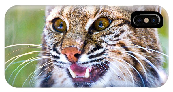 Bobcats iPhone Case - Close-up Of A Bobcat Lynx Rufus by Panoramic Images