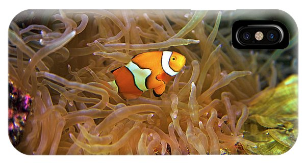 Close Up Of A Clown Fish In An Anemone IPhone Case