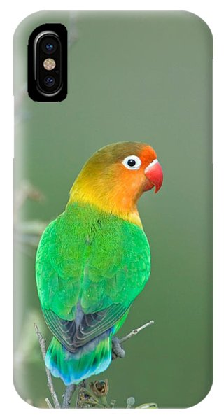 Lovebird iPhone Case - Close-up Of A Fischers Lovebird by Panoramic Images