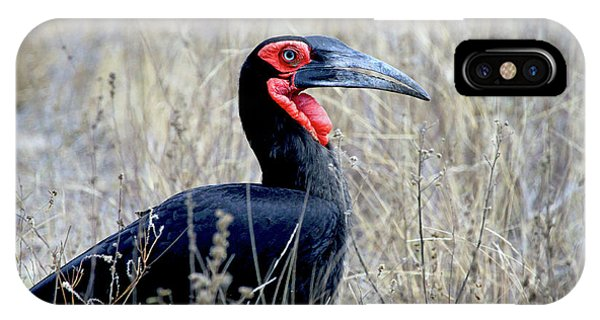 Close-up Of A Ground Hornbill, Kruger IPhone Case